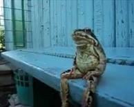 Frog340